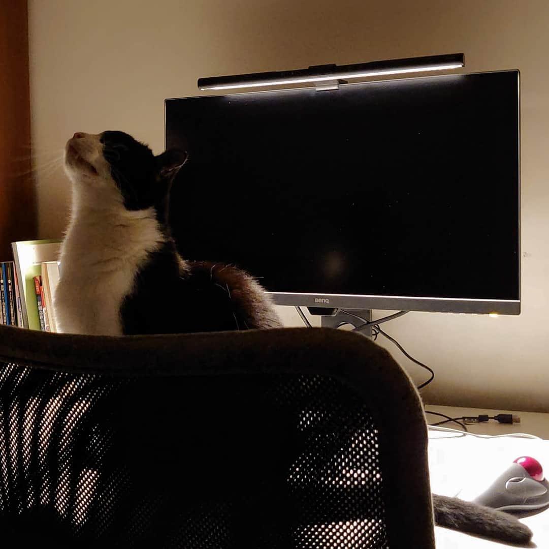 貓的趨光性 (BenQ ScreenBar)